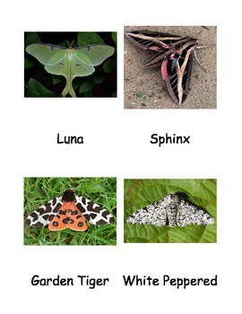 Kinds of Moths Cards