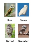 Kinds of Owls 3 Part Cards