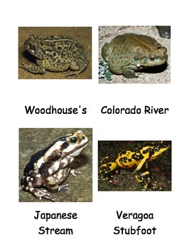 Kinds of Toads