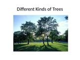 Kinds of Trees PowerPoint