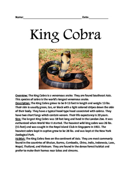 King Cobra - Informational article lesson facts questions vocab word search
