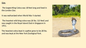 King Cobra Power Point - facts information - overview history