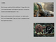 King Kong - Power point history facts information pictures