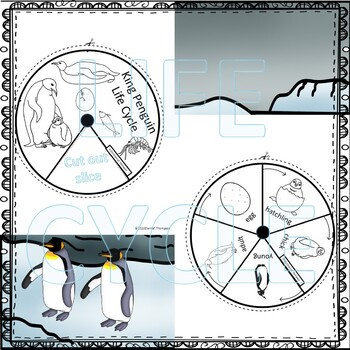 King Penguin (Life Cycle Spinner)