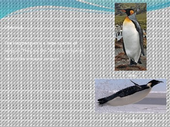 King Penguin - Power Point - Information Facts Pictures