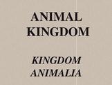 Kingdom Animalia - Animal Kingdom Overview Powerpoint