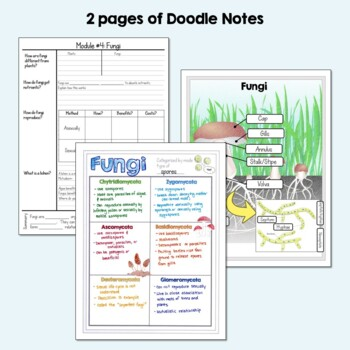Characteristics of Kingdom Fungi: Powerpoint, Interactive Notebook, Lab, Quiz