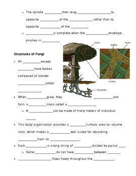 Kingdom Fungi - Fungus Notes Outline Lesson Plan