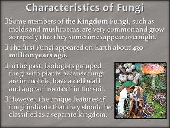 Kingdom Fungi - Fungus PowerPoint Presentation Lesson Plan