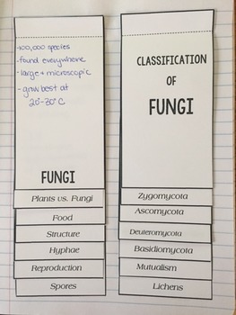 Phyla of Kingdom Fungi: Powerpoint & Interactive Notebook