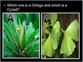 Plant Kingdom Lesson