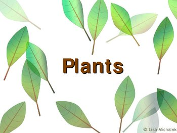 Kingdom Plantae - Plants PowerPoint Presentation Lesson Plan