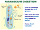 Kingdom Protista - Amoeba, Euglena & Paramecium (Editable)