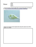 Kingdom Protista - Euglena Movement and Structure