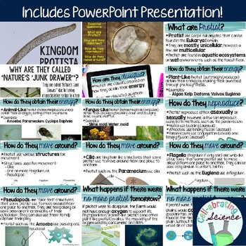 Kingdom Protista PowerPoint, Notes, and Foldable