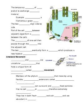 Kingdom Protista - Protists Notes Outline Lesson Plan