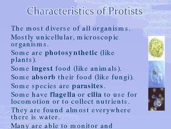 Kingdom Protista - Protists PowerPoint Presentation Lesson Plan