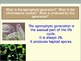 Protista Kingdom Review Question and Answer PowerPoint
