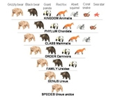 Kingdoms of Life & Classification of Organisms - Lessons,