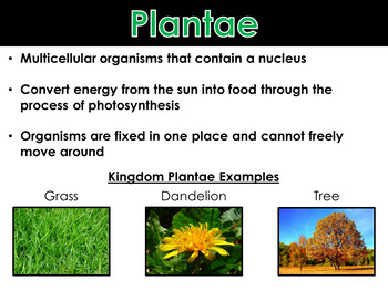 Kingdoms of Life - PowerPoint and Notes