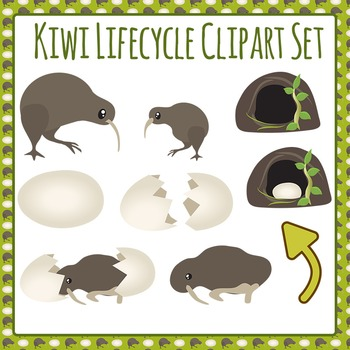 Kiwi Life Cycle Clip Art Set for Commercial Use