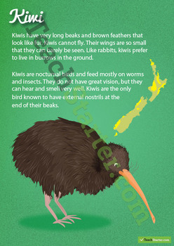 Kiwi – New Zealand Animal Poster