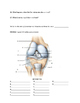 Knee Video Tutorial Handout