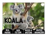 Koala-A Research Project