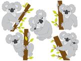 Koala Clipart - Digital Vector Koala, Tropical, Australia,
