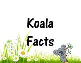 Koala Facts + Koala Project