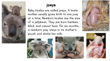 Koala Informational Cards