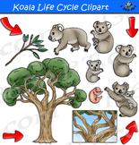 Koala Life Cycle Clipart