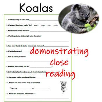 Koalas Informational Reading Passage