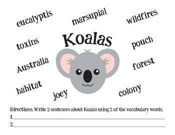 Koalas Vocabulary