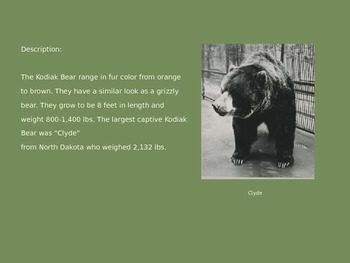Kodiak Bear - Power Point - Information Facts Pictures