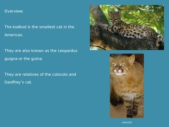 Kodkod - Powerpoint - endangered animal facts information pictures