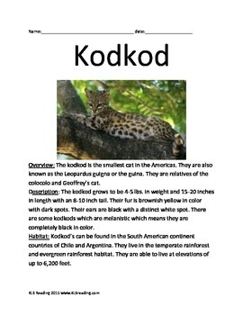 Kodkod - endangered cat - informational article facts questions vocabulary