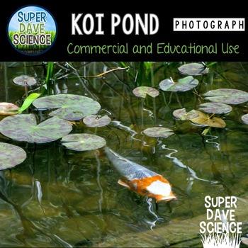 Koi Pond Photograph