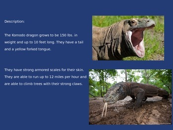 Komodo Dragon - Power Point - Information Facts Pictures