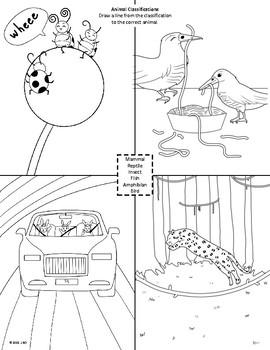 Kooky Animal Classifications