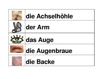 Körper (Body in German) word wall