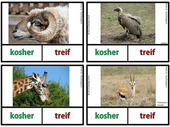 Kosher vs. Non-Kosher Animals -Animals of the Bible Activities