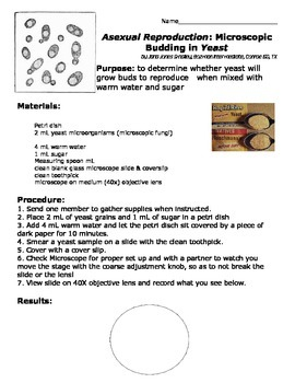Mode of Reproduction- Budding- in Yeast LAB