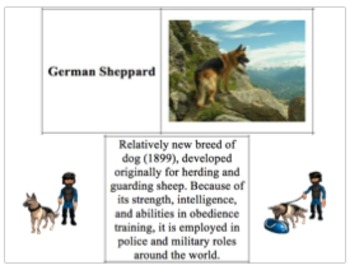 LAB - Selective Breeding of Dogs (w/ PowerPoint)