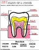 LABEL THE PARTS OF A TOOTH - PRECOLORED