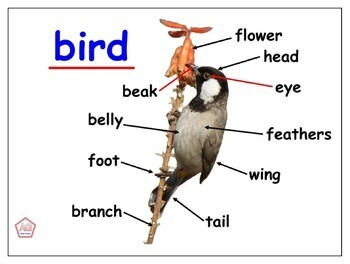 LABELED ANIMAL PHOTOS FOR WRITING, SCIENCE, MATH SORTING