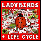 LADYBIRDS LIFE CYCLE TEACHING RESOURCES SCIENCE INSECTS MINIBEASTS NUMERACY