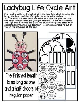 LADYBUG LIFE CYCLE ART ACTIVITY