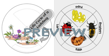 LADYBUG LIFE CYCLE(BOARD GAME,WHEEL,CARDS,WORKSHEETS,CLIP ARTS)