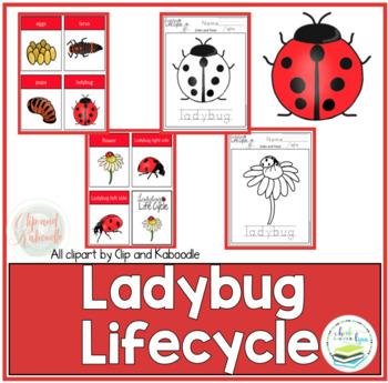 LADYBUG LIFECYCLE FREE PRODUCT